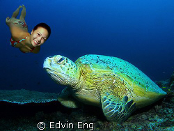 Beauty &amp; The Turtle! Taken in Redang &amp; Sipadan with Canon... by Edvin Eng 